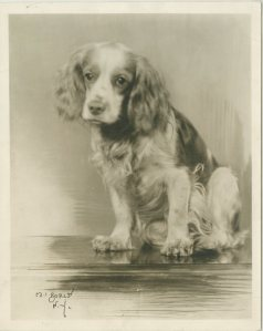 Flush, the cocker spaniel from The Barretts of Wimpole Street.