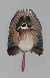 Entire flattened taxidermed body of mallard duck applied to cherry-wood handle, 1880-1889. Museum of the City of New York, 60.132.3.