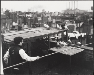Raising Pigeons on Rooftops, Lower East Side.